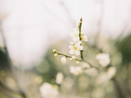 相逢,若春暖花开