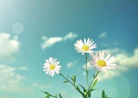 带上阳光,与春天同行
