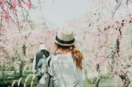 提一篮清风,邂逅一朵花